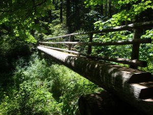 McKenzie River Trail Bridge